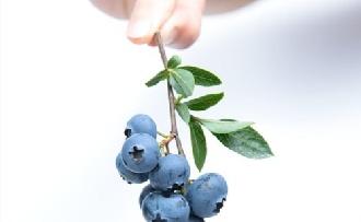 Minden adag gyümölccsel intelligensebb lesz a gyermek?