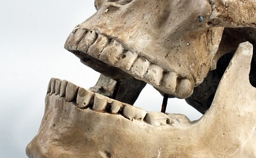 Árulkodó fogak: lágyabb ételeket ettek őseink, mint hittük?