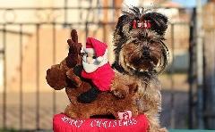 Kis kedvenc karácsonyra?