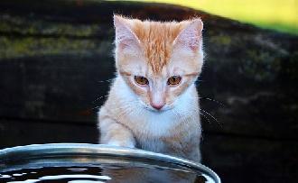 Kell a macskát fürdetni?