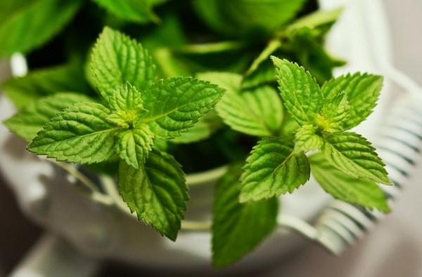 A zöld tea kivonattal készülő fogkrém hosszútávú megoldásnak ígérkezik a fogérzékenység ellen