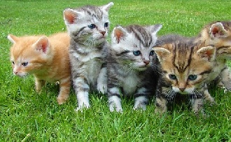 Ezért esznek a macskák füvet