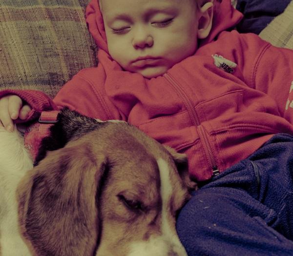 A gyerekek immunitását erősíti, ha van állat a háznál
