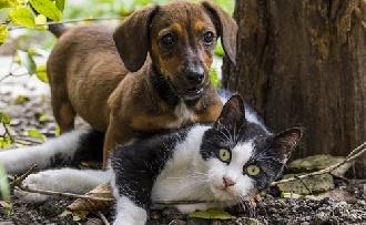 Népszerű hazánkban a háziállat - és minden, ami vele jár