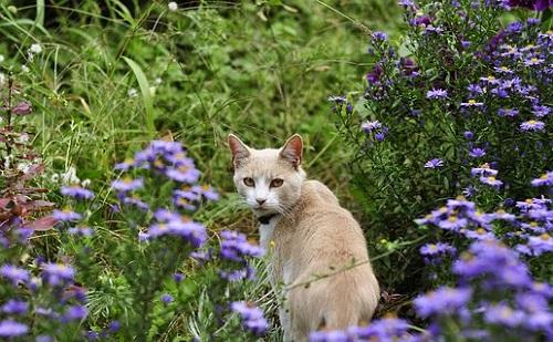 Tartsd távol a cicát a szobanövénytől