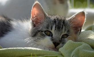 Az állatok csökkentik a stresszt