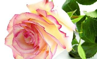 Így hidratáljuk a bőrünket egy tucat rózsával!